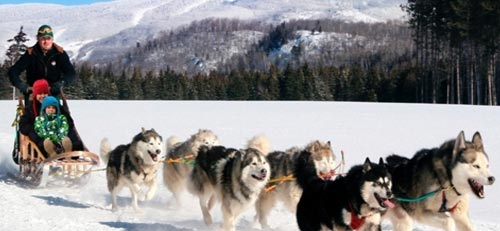 Enjoy Dogsleding in Tremblant